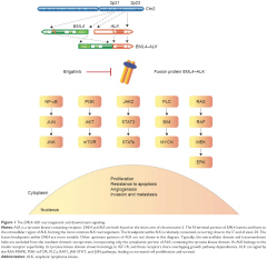 Fig 1. The EML4–ALK rearrangement and downstream signaling.