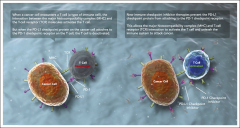 Fig 2. Immune checkpoint inhibitors: releasing the brakes on the immune system. MHC, major histocompatibility complex; PD-1, programmed death 1; PD-L1, programmed death ligand-1; TCR, T-cell receptor.