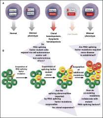 Fig 2. Requirement of RNA splicing factor mutations in disease initiation vs maintenance.