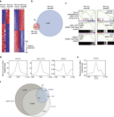 Fig 3. ASXL2 target genes overlap with those of RUNX1 and AML1-ETO.