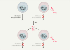 Fig 1. Impact of NRP1-Deficient Tregs on WT Tregs.