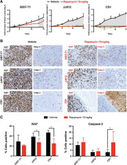 Fig 4. Long-term rapamycin treatment slows down tumor growth in GIST-T1 and induces tumor arrest in JJ012 and CS1 in vivo.