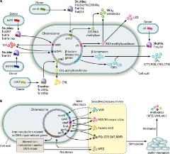 Fig 1. Diagram illustrating the known factors contributing to the development of antibiotic resistance in Clostridium difficile.