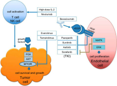 Fig 1. Mechanisms of action of commonly used systemic agents in treatment of renal cell carcinoma (RCC).