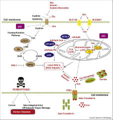 Fig 1. Regulation of ferroptosis by cellular metabolism.