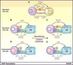 Figure 1.Schematic representation of NK-cell functions in neuroblastoma (NB).