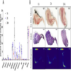 Fig. 1. Acute biodistribution of [223Ra]RaCl2 in healthy C57Bl/6 mice.