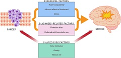 Fig. 1 Potential reasons for cancer patients' increased risk of ischemic stroke. The diagram depicts the possible underlying explanations for cancer patients' heightened stroke risk.