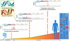 Fig. 1 An individual's unique mutational signature is a record of the types of DNA alterations sustained throughout their lifetime and can be studied to identify unique patterns of etiology-specific alterations, including carcinogens or DNA repair pathway defects, the latter of which can be inherited or acquired during oncogenesis.