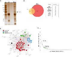 Figure 3. Mass Spectrometry of RBM39 Proteome Identifies an RBP Network Required in AML.