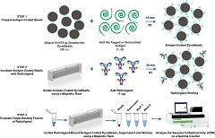 Fig. 1. Overview of the bead-based radioligand binding assay.