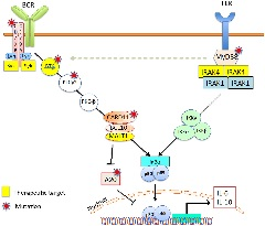 Figure 2. Interaction between the B‐cell receptor (BCR) signaling and the Toll‐like receptor (TLR) signaling pathways.
