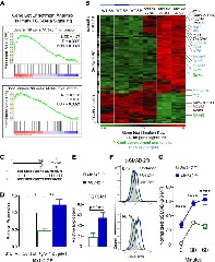Figure 4. TGF-β Signaling Is Increased in Mir142−/− Type 1 ILCs.