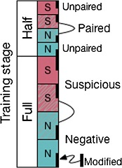 Fig 2. Diagram illustrating the stratified image sampling for the second readout (72 images total).