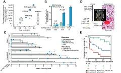 Fig 2. Genomic correlates of contrast-enhancement on brain imaging in IDH-mutant tumors.