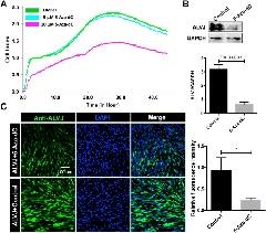 Fig. 1. DNA demethylation agent 5-Aza-dC inhibits ALVJ replication in vitro.
