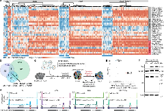 Fig 1. BRD9 mis-splicing causes BRD9 loss and proliferative advantage in SF3B1-mutated cancers; c. CRISPR–Cas9-based positive-selection screen targeting genes for which mutant SF3B1 promotes an isoform predicted to trigger NMD.