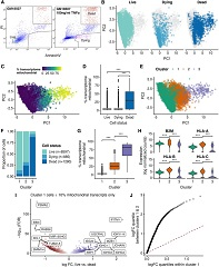 Fig 2. Transcriptomic landscape of live, dead, and dying cells