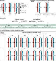 Fig 2. HLA-B leaders in HLA-B-mismatched unrelated donor transplantation.