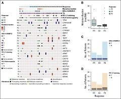 Fig 3. Pathologic and genomic correlates of response.