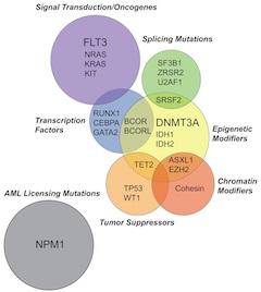 FIGURE 1. Functional overlap of acute myeloid leukemia driver mutations.