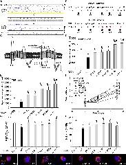Figure 1. Identification of Loss of Function ABCA1 Mutants in CMML