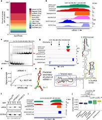 Fig 5. XPO5 associates with diverse cellular RNAs.