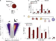Figure 1. TET2KO Cells Are More Stem-like than TET2WT Isogenic Counterparts.