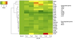Fig 2. Heatmap of candidate gene expressions with hierarchical clustering in PTCs (RPTECs) exposed to 6 different FLCs (T-κ1, T-κ2, T-κ3, T-λ1, T-λ2, T-λ3) for 24 hours.