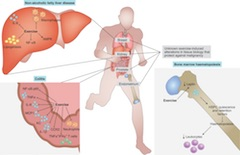 Fig 1. Exercise-induced protection against tissue-specific perturbations in organs involved in cancer regulation or prone to malignancy.