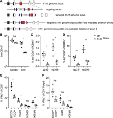 Figure S1. ST2 expression on T cells promotes antiviral T cell response against LCMV.
