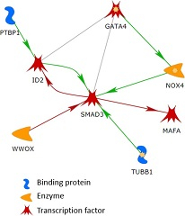 Fig 1. The largest connected network in the list of 144 genes. The line colors indicate the activation (green), inhibition (red), and unspecified (gray) effects.