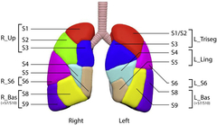 Figure 2. Anatomic lung segments and 7 study groupings (4 left, 3 right).