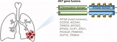 Fig 1. Schematic illustration of RET gene rearrangements identified in non-small-cell lung cancer.
