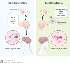 Figure 3: Germline and somatic causes of neurodegeneration.