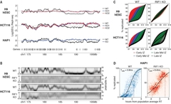 Fig. 1 RIF1 controls RT by reducing cell-to-cell variation in replication timing.