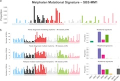 Fig 2. Fig. 2: Melphalan mutational signatures.