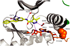 Figure 1. Type I Inhibitor PLX9486 Binds to Mutant KITD816V With High Atomic Efficiency.
