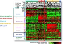 Fig 4. TCGA molecular subtypes of muscle invasive UC by RNA expression profiling.