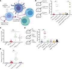 Figure 5: Autocrine effects of mtIL-12 on Tvax cells mediate enhanced immunity of Tvax through IFN-γ.