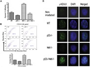 Fig 4. p53 Is Essential for Maintaining Hematopoietic Stem Cell Quiescence in Mef Null Mice.