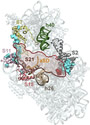 Fig 4. The Platform-Binding Center for Folded 5´-UTR mRNAs.
