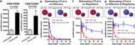 Fig 3. CTLA-4ñ/ñ T reg cell display diminished regulatory activity during in vitro suppressor assays.