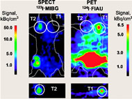 Fig 1. Dual-modality imaging using hNET and HSV1-tk reporter genes for monitoring different populations of antigen-specific CTLs.