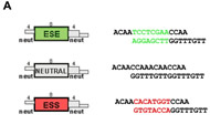 Fig 2a. Cartoons of E, N, and S modules showing single-stranded ends used for ligation, along with the actual sequences.